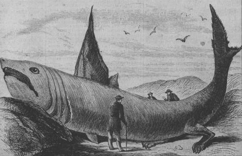 Basking_shark_Harper's_Weekly_October_24,_1868